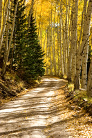 Aspen Lined Country Road Dappled with Shadows